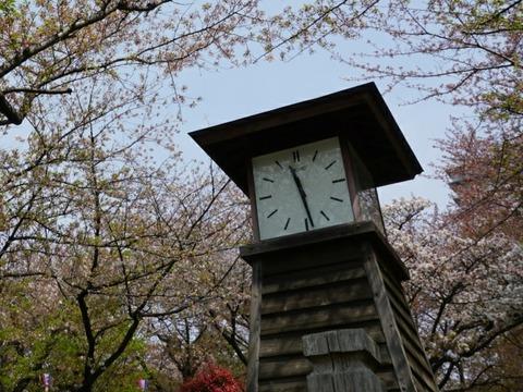 【王子】飛鳥山公園【北区人気No.1!都電SLモノレールが楽しめる桜の名所】