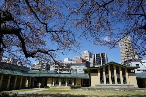 【目白】自由学園明日館【池袋から歩いて行ける人気桜スポットは大正ロマン感じるレトロな空間だった!】