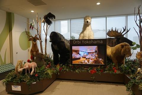 【みなとみらい】オービィカフェ【オススメ!動物とふれあえる!横浜の人気屋内テーマパークのカフェ】