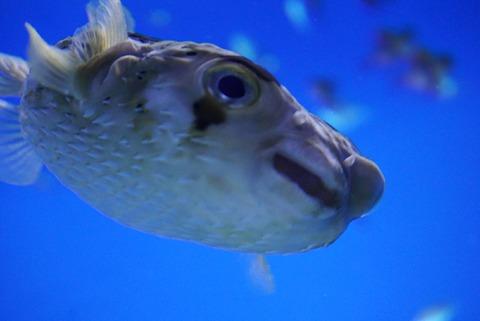 【大洗】アクアワールド茨城県大洗水族館【アシカがイルカに乗るショーが凄すぎる!ファミリーやデートにもおすすめ!】