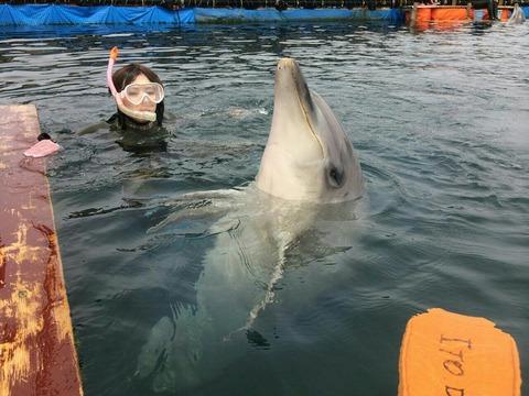 【伊東】伊東ドルフィンファンタジーのイルカに癒されました♪