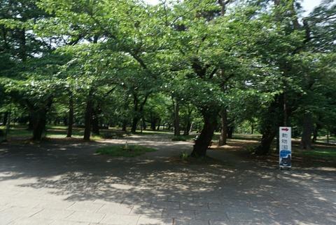 【大宮】大宮公園【小動物園・博物館などがあって1日中楽しめそうな公園】
