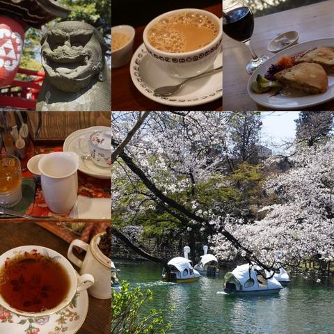 吉祥寺井の頭恩賜公園で2020年コロナ渦のお花見と紅茶屋めぐり