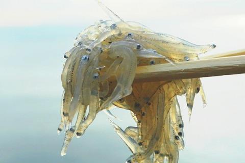 【江ノ島】魚見亭【眼下に大海原!絶景インスタ映えスポットで生しらすに江の島丼!】