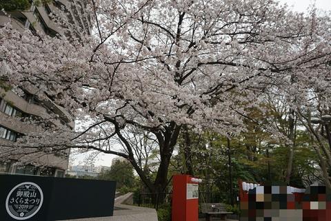 【品川】御殿山庭園【オススメお花見スポット!御殿山トラストシティさくらまつり2019!】