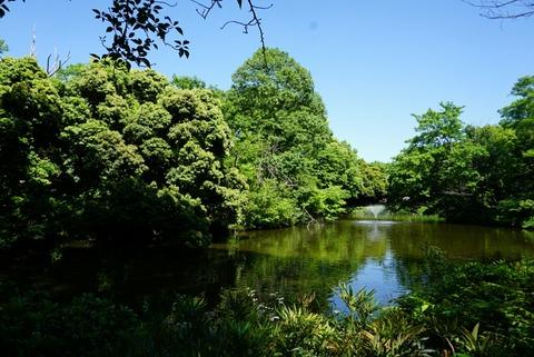 【永福町】和田堀公園【大きな池のある公園でマイナスイオンを感じながらのんびり散歩。デートにおすすめです♪】