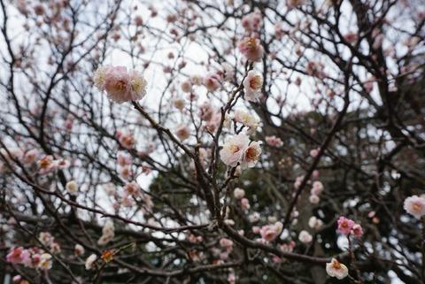 【県庁前】亥鼻公園【千葉発祥の地はお花見におすすめの桜スポットだった!】