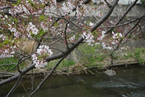 【伊東】松川遊歩道【文学者木下杢太郎先生の作品と風情ある温泉街の景色】