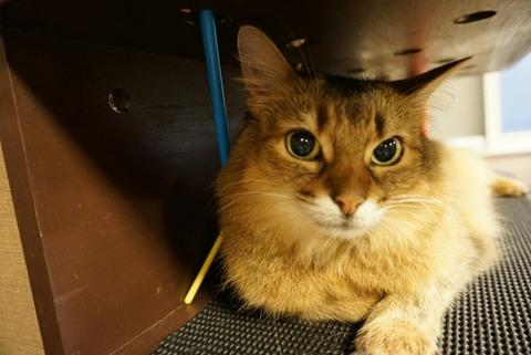 【新宿】猫カフェ きゃりこ 新宿店【可愛い猫が沢山!電源カフェとしても利用できる便利な猫カフェ♪】