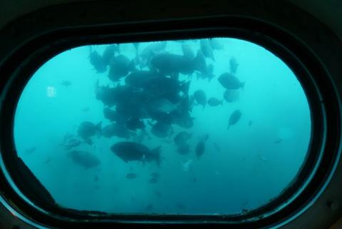 【勝浦】勝浦海中公園展望塔【晴れた日がオススメ!様々な種類の海のいきもの達を間近で観察できちゃう!】