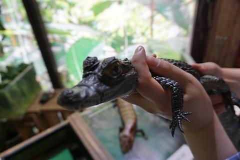 【伊豆】iZoo(イズー)【観覧注意!日本最大の爬虫類の体感型動物園は夏休みにぴったりの観光スポットだった!】