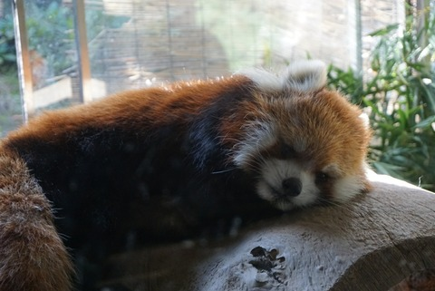 【横浜市】よこはま動物園ズーラシア【デートにオススメ!広大な敷地の自然と動物たちに癒されよう!】