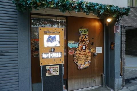 【秋葉原】猫カフェ ねこJaLaLa【アットホームで居心地のいい癒し系猫カフェ】