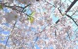 春のかべがみ