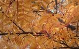 秋のかべがみ2