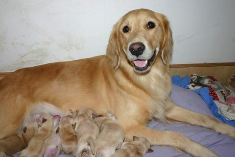 2005904noritake, puppies 012