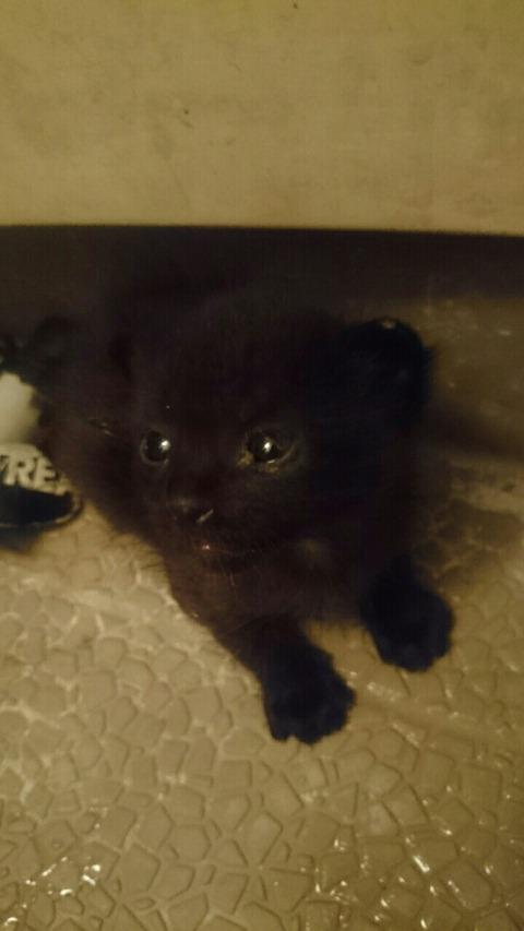 子猫が急死してからちょうど2週間、日本のペット事情の矛盾を感じる