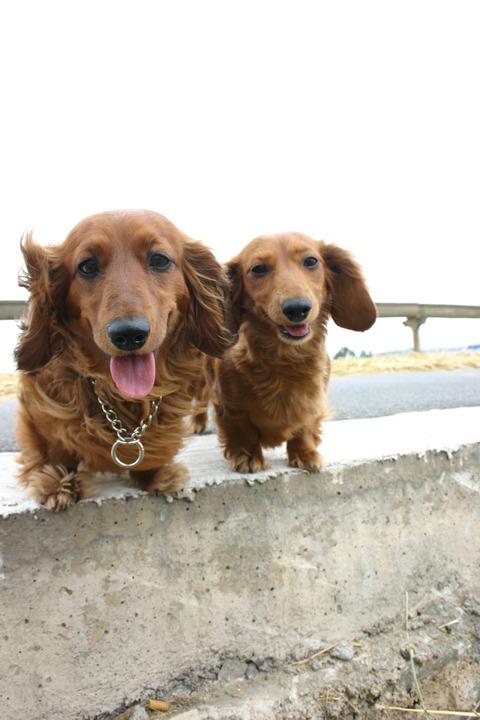 ラッキー、ハッピー、サニー、愛犬3頭との夢のような生活が突然終止符を打ってから1年