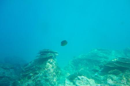本当の海の中