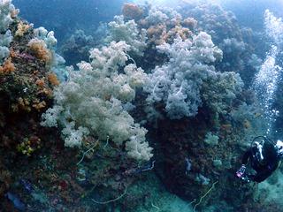 koraru