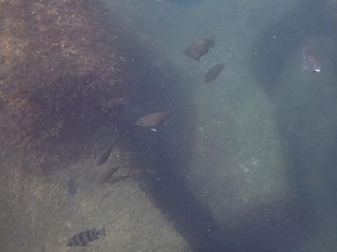 2018黒鯛 (1)