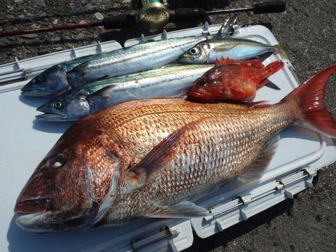 2015.04.23 Fish-09