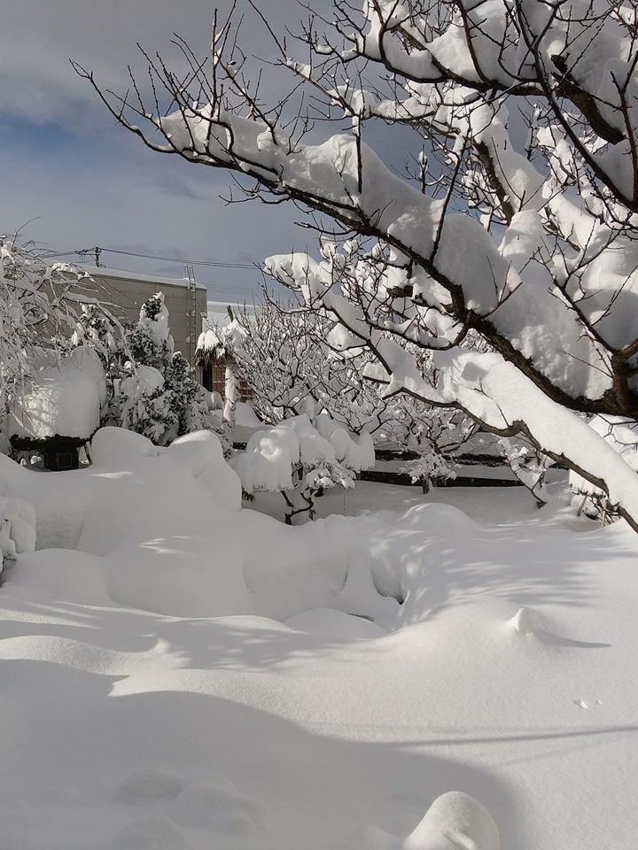 2021年1月大雪 (3)