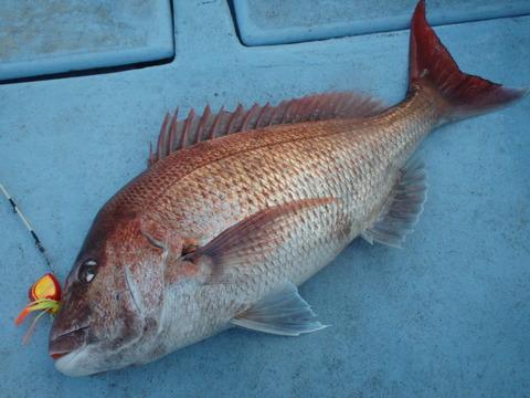 2015.04.23 Fish-05