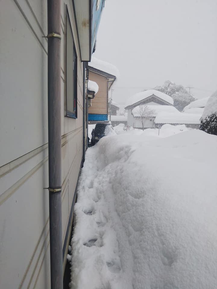 2021年1月大雪 (24)