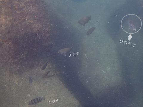 2018黒鯛 (2)