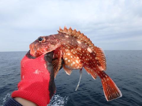 180506釣り-05