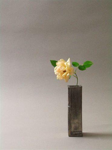 安藤雅信さん×プランターの薔薇