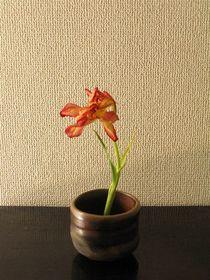 横山直樹×鬱金香