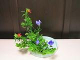 写景盛花自然本位−夏の三種