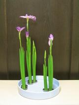 花菖蒲−写景盛花様式本位