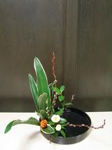 色彩盛花様式本位−万年青1−