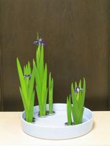 春の燕子花2