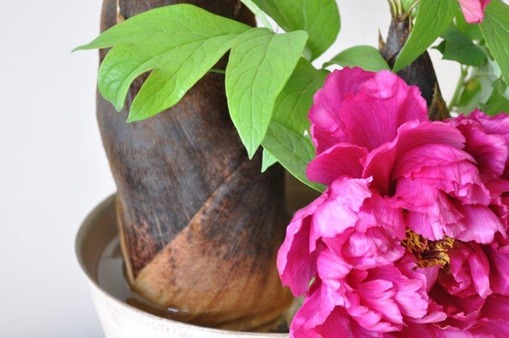 牡丹と竹の子