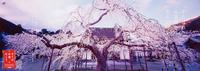 2000_spring
