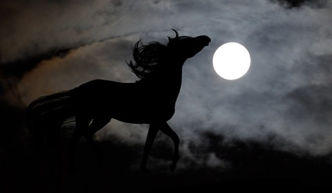 horse-654842_1280