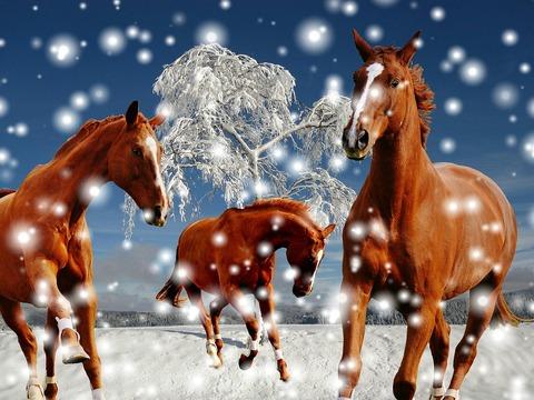horses-1888246_1280