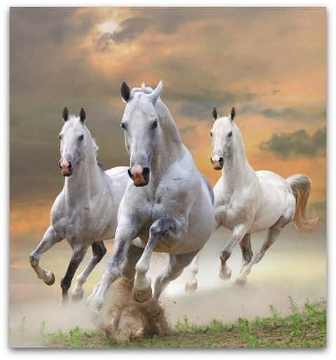 HORSE 0604 THREE 白馬