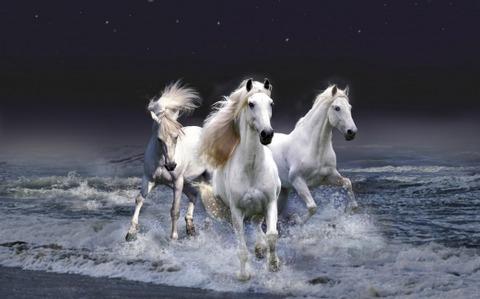 Horses ランニング