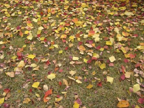 落ち葉も捨てたもんじゃない。