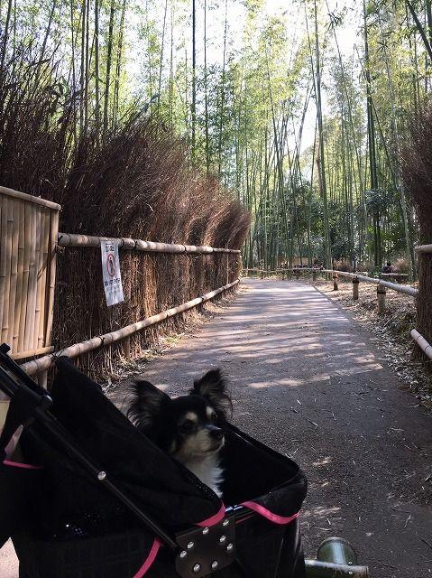 京都旅_49
