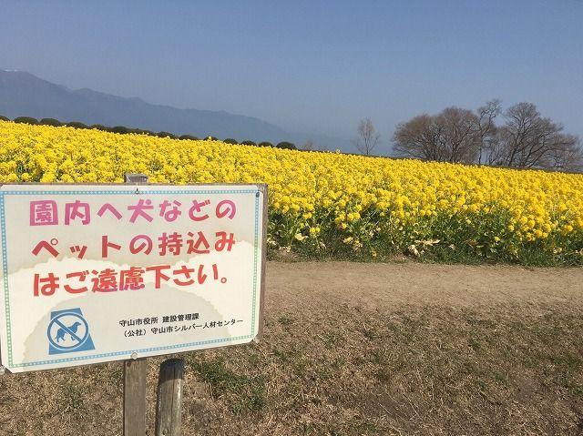 滋賀旅_39