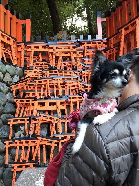 京都旅_14