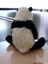 パンダです。2