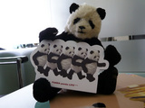 パンダです。3