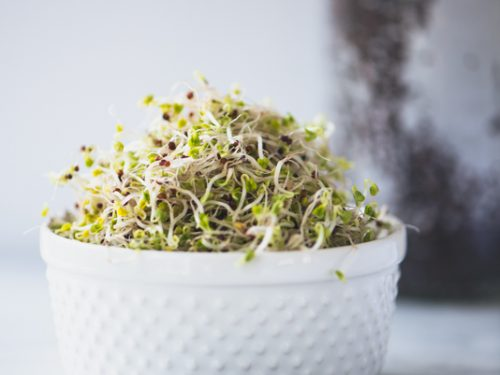 How-to-Grow-Broccoli-Sprouts-22-500x375